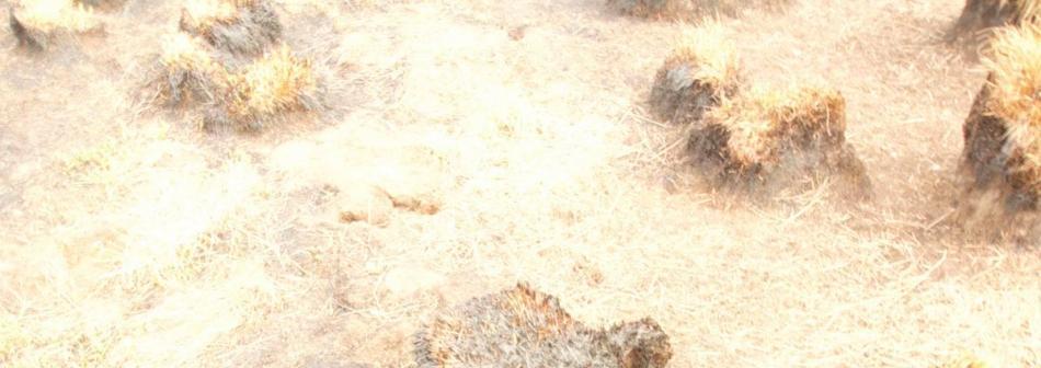 photographie, paysage brûlextérieur-jour brûlé, photographie, paysage brûlé, photo floue, danse et Butô en musique photo floue, danse et Butô en musique
