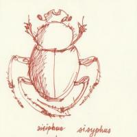 Moraczewska-sisyphus-dessin